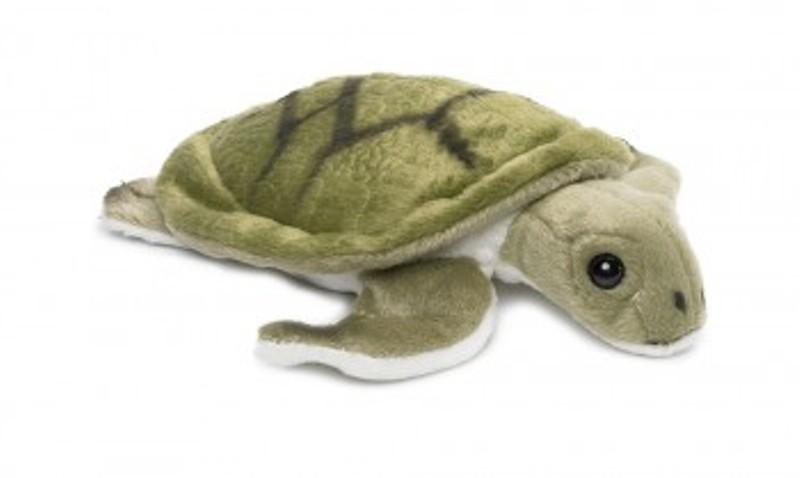 Großes Bild Wasserschildkröte